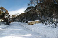 Wintergreen 3