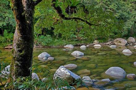 Mossman Gorge & Cape Tribulation