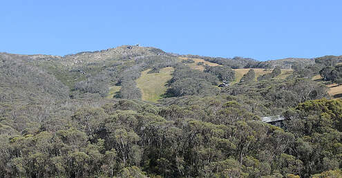 View of Thredbo Mountain from Aspect