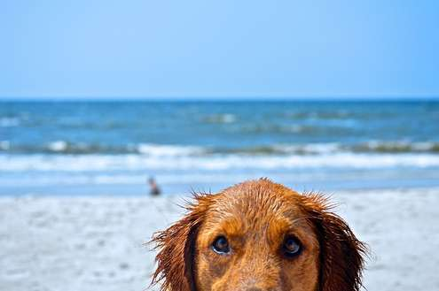 Lumiere Is Pet Friendly & The Pet Friendly Beach Is Only a Short Walk Away - Your Pooch Will Love It