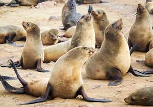 Seals at Seal Rocks...