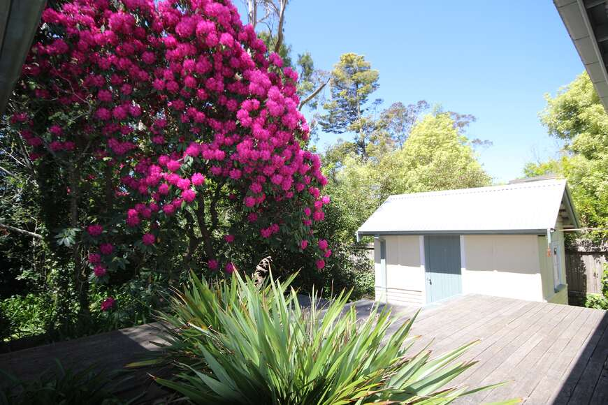 Rhodo in bloom in October