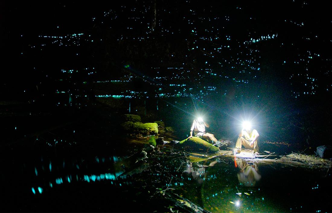 7. Blue Mountains Glow Worm Tours