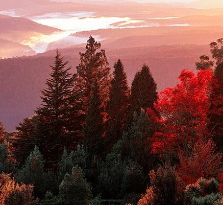 6. Blue Mountains Botanic Gardens Mount Tomah