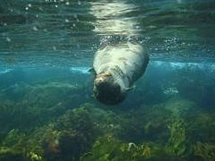 Snorkel with the Seals & Sailing Cruise